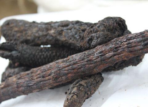 内蒙古野生的肉苁蓉